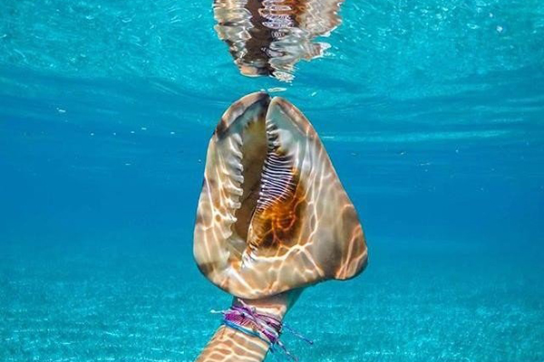 How To Clean Conch